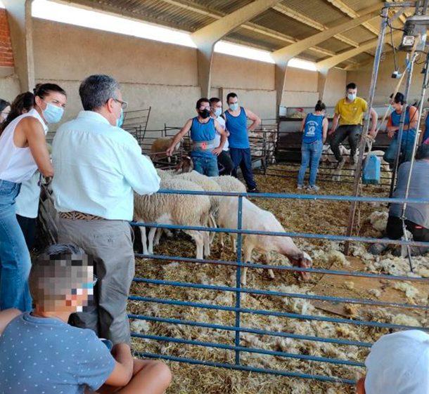 El curso de esquileo facilita la formación de profesionales zamoranos en el sector ganadero